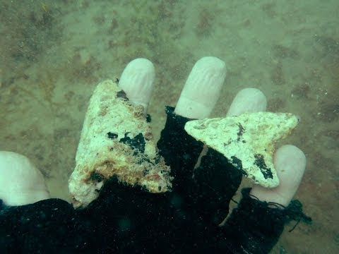 Megalodon Shark Tooth Diving Off Venice Beach With Aristakat Charters