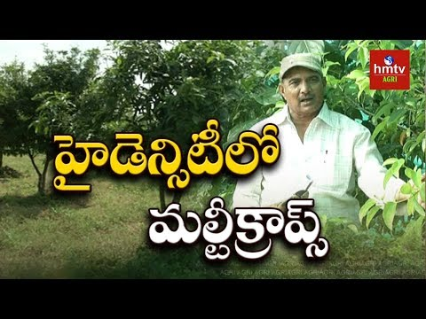 High-Density Farming | Fruits & Vegetables Farming Techniques | hmtv Agri