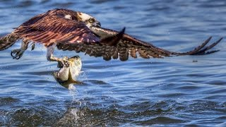 Canon 5DS & 5DSR Review: Wildlife Photography