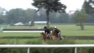 Trening koni wyśigowych 2016-05-27 Partynice