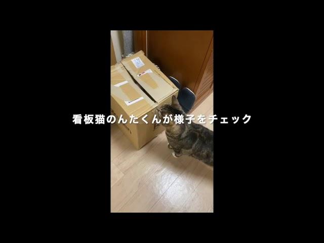 宮前区菅生校の看板猫「ガッチャン」を探せ