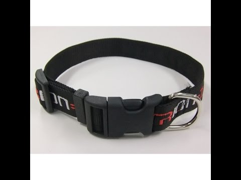 Talking Dog 1- New Collar