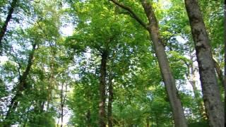 Пейзажный парк в Качановке(, 2016-08-19T21:53:23.000Z)
