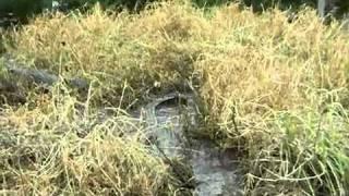 Толпа дебилов кидает камни в крокодилов(, 2011-10-24T16:27:11.000Z)