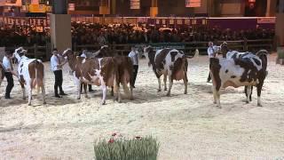 Concours race Montbéliarde (2/3)