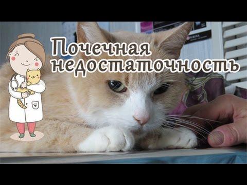 Почему болят почки у кошек