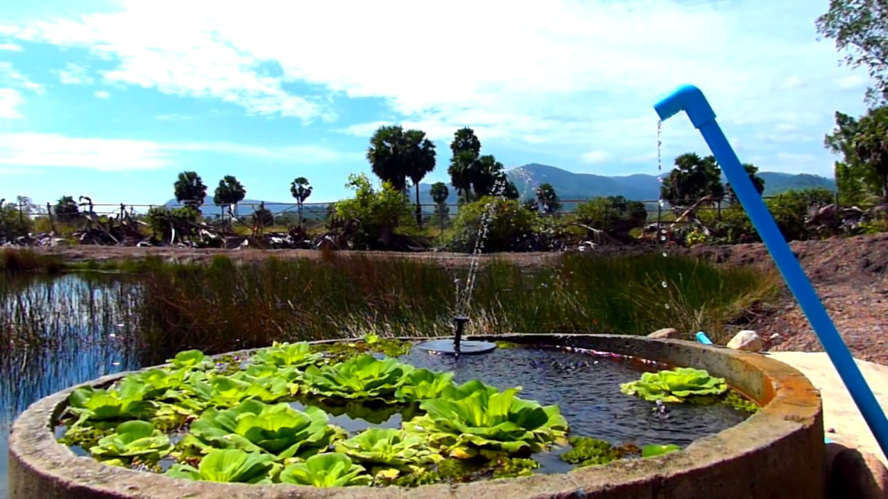 600m2 Natural Swimming Pool Ganesha Kampot Eco Guesthouse And More Cambodia Youtube
