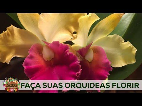 faça-suas-orquídeas-florescerem-como-nunca.-use-o-substrato-e-adubo-certos.