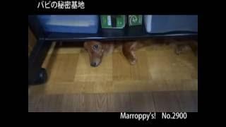 赤ちゃんの時からここでつお~ Marroppy's! http://members.jcom.home.ne.jp/ka-chan/ http://marroppys.blog97.fc2.com/
