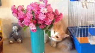 Буся-травоядное животное! Моя кошка ест ✿цветы✿!