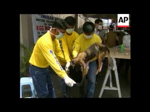 PHILIPPINES: MANILA: 40 DOGS KILLED IN CAMPAIGN AGAINST RABIES