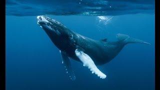 Relaxation music, whale songs -Música relajación, cantos de ballena