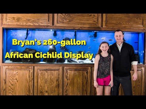 Bryan's 260-gallon African Cichlid Display