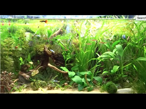 how to build a 125 gallon fish tank