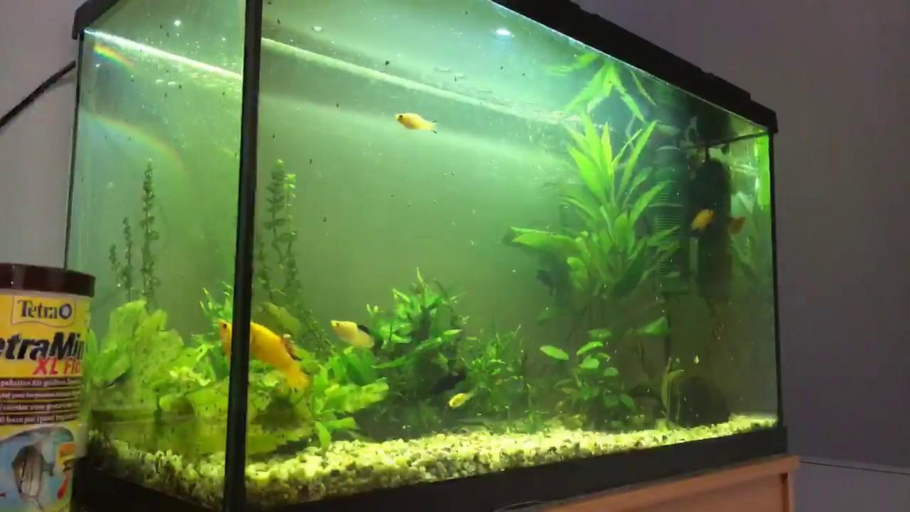 was macht ihr gegen die schnecken hilfe im aquarium. Black Bedroom Furniture Sets. Home Design Ideas