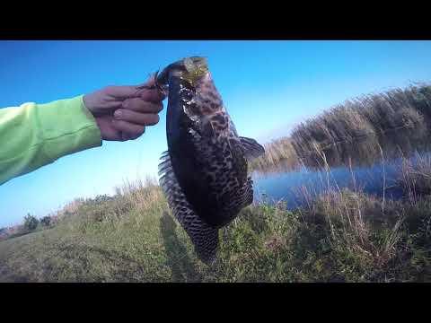 Fishing Tamiami Trail [Everglades, FL]
