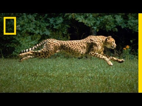 The World's Fastest Runner | National Geographic