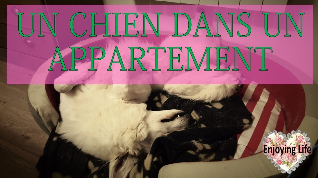 un chien en appartement bonne ou mauvaise id e enjoying life youtube