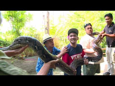 BROWNIS - Igon Ko Takut Sama Iguana ??? (10/3/19) Part 2