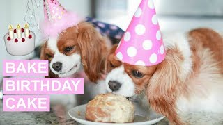 HOW TO BAKE A BIRTHDAY CAKE FOR DOGS | Healthy Organic Dog Cake Recipe
