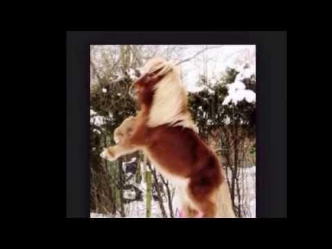 De meest bekende paardenrassen    / liedje : black horse