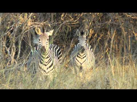 EPIC AFRICA: Zambia