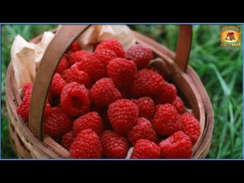 Самые лучшие сорта ремонтантной малины, чтобы получить хороший урожай. Дачные советы и рекомендации