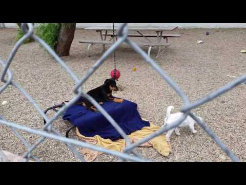Cute Puppies & Dogs Playing At Laguna Beach Animal Shelter - PUP - Orange County, CA