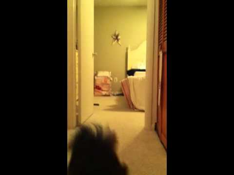 Cat sneak attacks dog