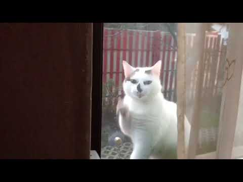 Cat knocking to the window