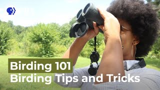 Tips and Tricks for Birding Beginners | Birding 101 with Sheridan Alford