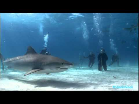 Daily Planet - Meet Rob Stewart of Sharkwater