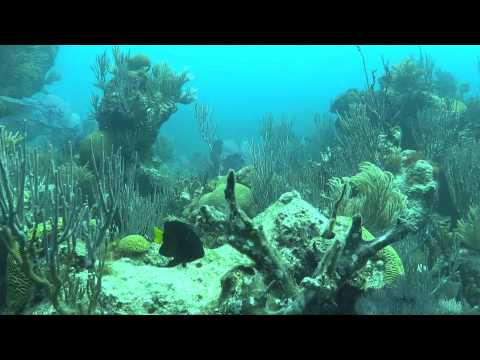 The Southwest Breakers Dive, June 16, 2014 Bermuda with Blue Water Divers