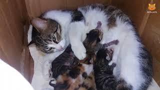 「かわいい猫」 笑わないようにしようとしてください - 最も面白い猫の映画 #157 thumbnail
