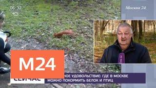 Смотреть видео Где в Москве можно покормить белок и птиц - Москва 24 онлайн