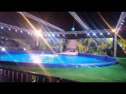 Dolphin Show / Doha - Qatar