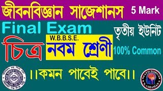 CLASS 9_LIFE SCIENCE FINAL EXAM SUGGESTION 2018//Class ix life science 3rd Evaluation 2018 in wbbse