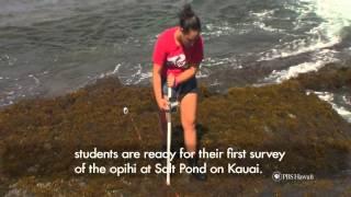 PBS Hawaii - HIKI NŌ Episode 505 | Ke Kula Niihau O Kekaha Public Charter School | Opihi Survey