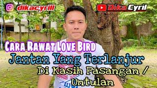 Download lagu Cara Rawat LOVE BIRD Jantan Yang Terlanjur Di Kasih Pasangan / Untulan