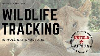 Wildlife tracking at Mole National Park with Ylenia Citino