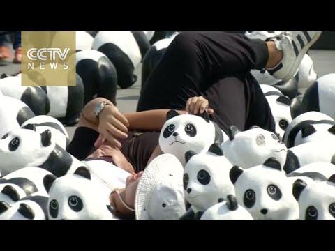 Panda power invades Bangkok