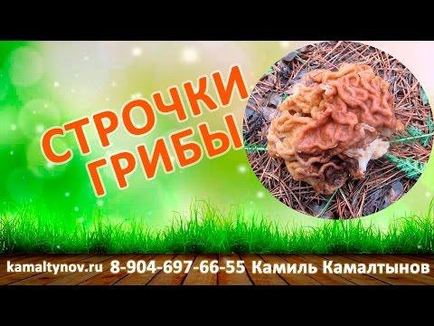 Строчки грибы