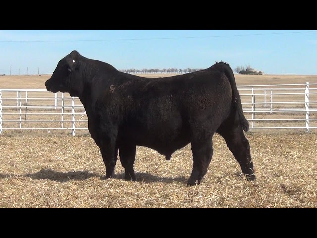 Express Ranches Lot 415