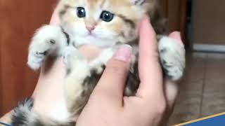#متداول: قطة مدللة تشعل مواقع التواصل الاجتماعي