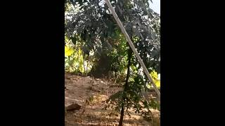 bangla animals