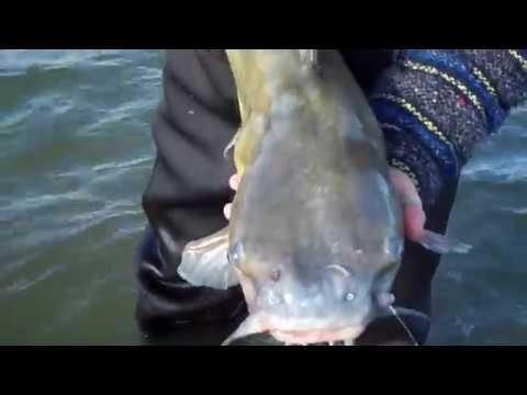 Rockstar Fishing Episode #1 Boyne River, Saginaw Bay and Webber Dam