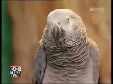 Einstein Papagei