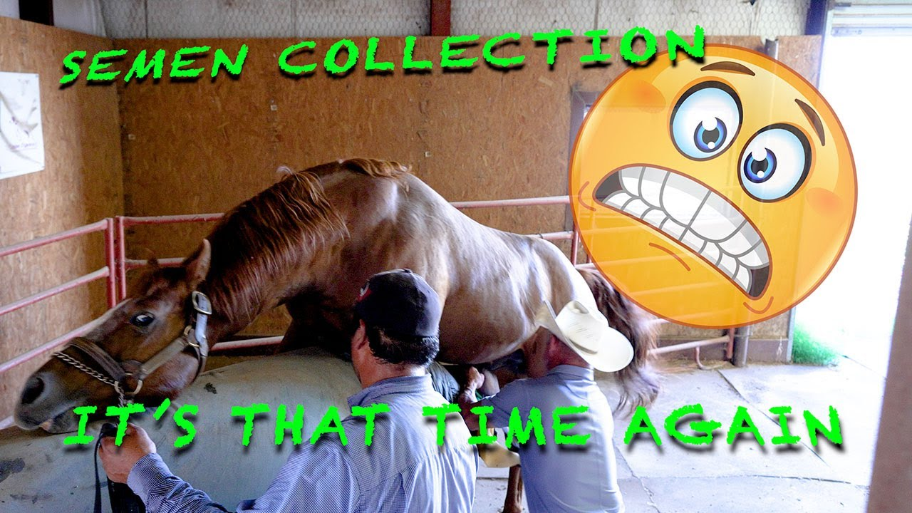 Download The how and why (semen collection) #horse #ranchlife #equinereproduction #clones