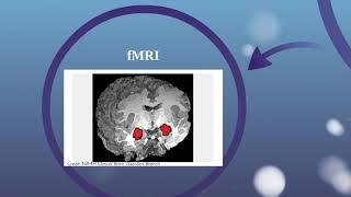 Canli et al. experiment Part 1 (Cambridge International AS Level psychology) 9990 YouTube Videos