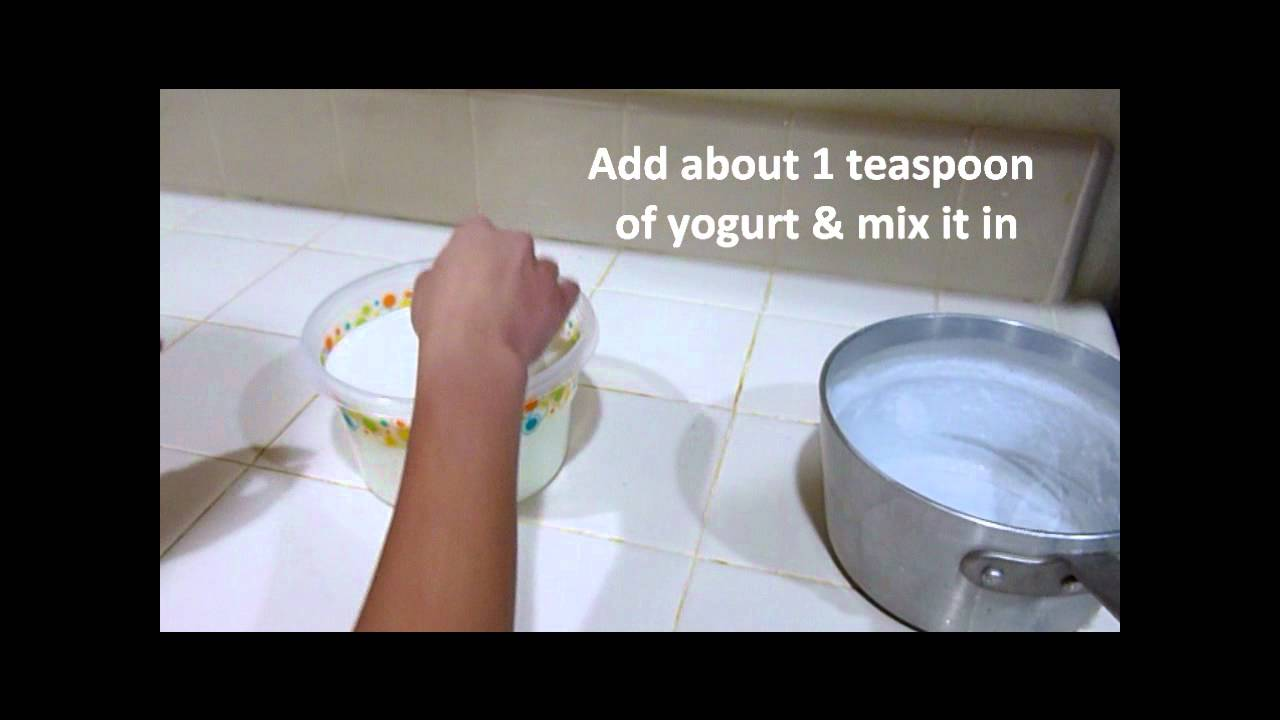lab report bacteria yogurt How to write a microbiology unknown lab report  posted by the two microorganisms were identified one was a gram-positive bacteria.